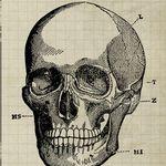 La anatomía del diseñador web