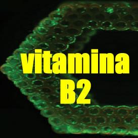 La vitamina B2 (la riboflavina) puede ser utilizada como compuesto para impresoras 3D