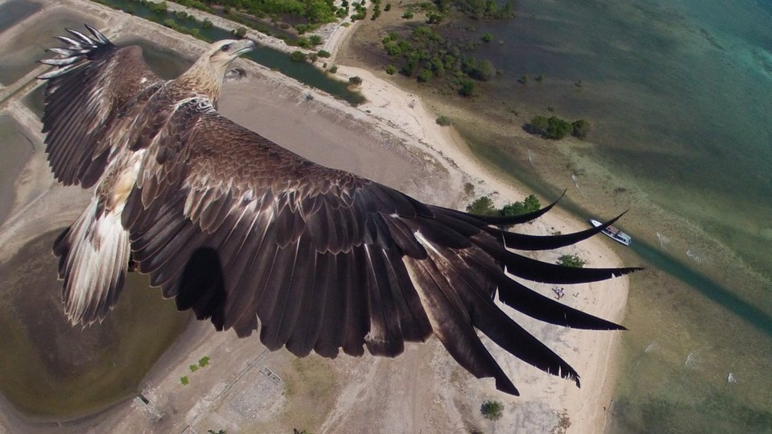 Una águila sobrevuela el Parque Nacional de  Bali  Barat - Photo usuario 'capungaero' en Donestagram