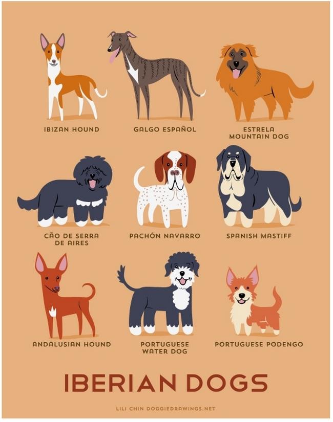 iberian-dogs