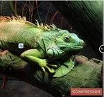 Compressor.io te ayuda a comprimir y optimizar tus imágenes sin perder calidad