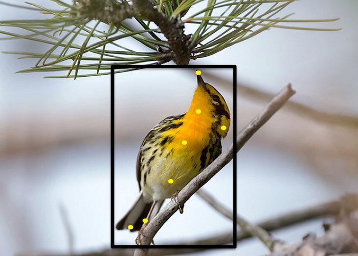 cornell-merlin-bird-id