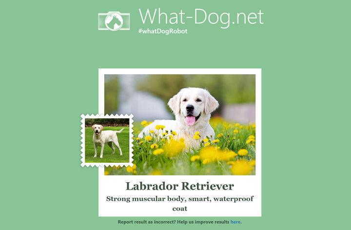 what-dog-net-microsoft