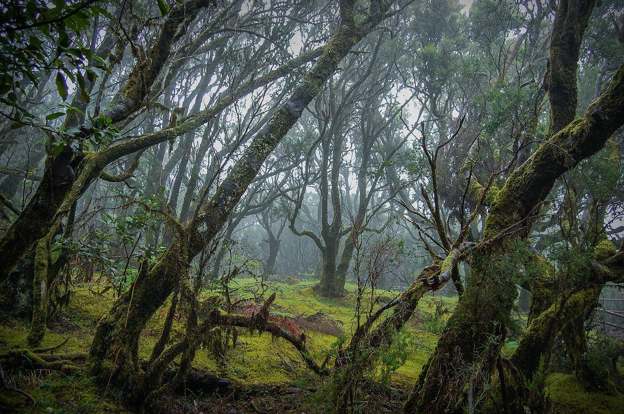 «Una ventana al mágico Parque Nacional de Garajonay, La Gomera». Segundo premio de Wiki Loves Earth España 2015. Josevi11, CC BY-SA 2.0.
