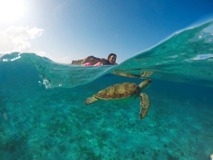 La chica de cumpleaños y su tortuga - Jeremie Tronet