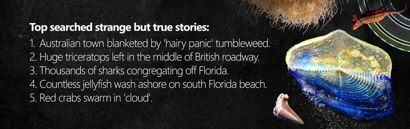 Bing 2016 Historias Extrañas Pero Verdaderas